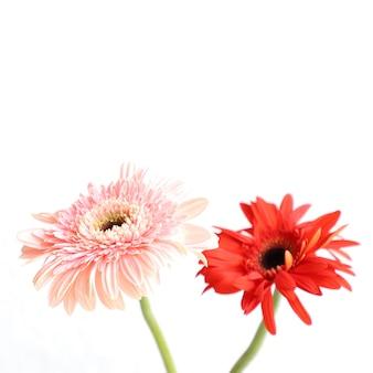 Flores vermelhas sobre fundo branco para aniversário, aniversário, casamento floral frame
