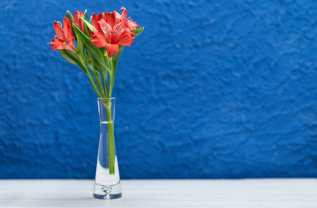 Flores vermelhas sobre um fundo azul na moda com textura. close-up com espaço para texto.
