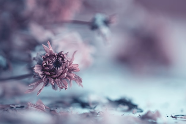 Flores vintage feitas com gradiente de fundo