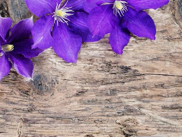 Flores violeta sobre fundo de madeira