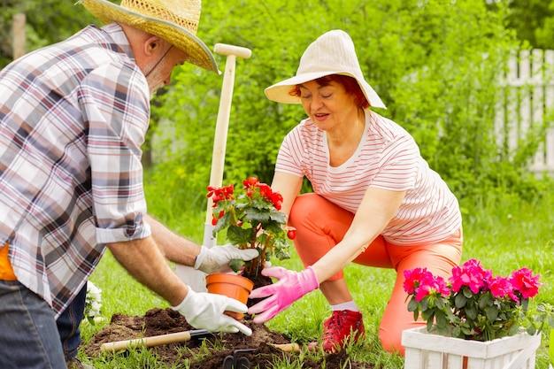 Floresce no solo. marido e mulher de cabelos grisalhos colocando flores vermelhas no solo enquanto as plantam