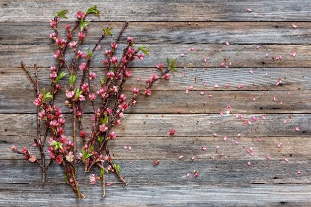 Florescendo flores cor de rosa nos galhos pêssego em fundo de madeira