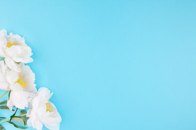 Florescendo flores de peônia branca