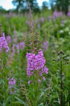 Florescendo no campo verde natureza e plantas medicinais
