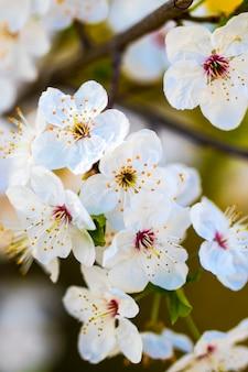 Florescer flores como pano de fundo colorido, foto macro
