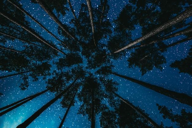 Floresta à noite com estrelas e nuvens.