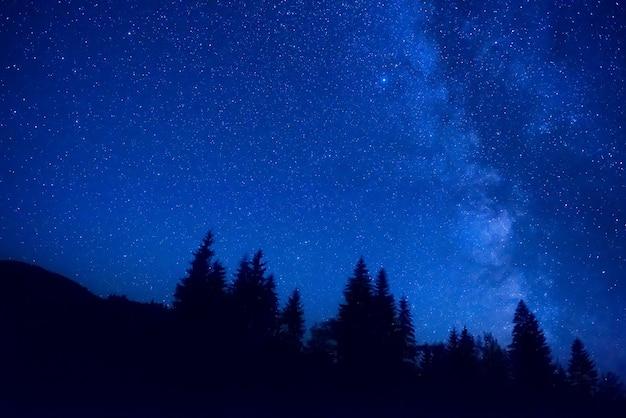 Floresta à noite com pinheiros sob um céu azul escuro com muitas estrelas