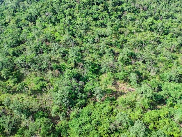 Floresta aérea da vista superior das montanhas altas.
