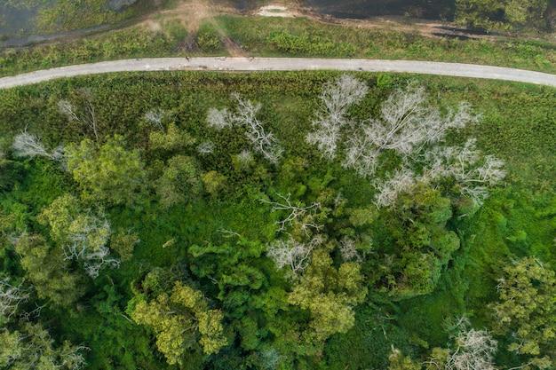 Floresta aérea da vista superior, fundo da textura da opinião da floresta de cima de.
