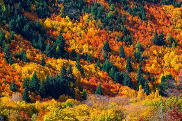 Floresta alaranjada e vermelha amarela verde colorida bonita das árvores do outono no monte.