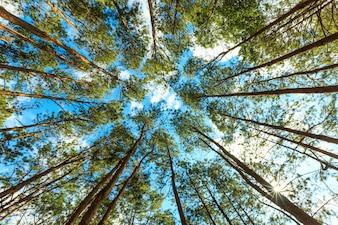 Floresta árvores natureza verde madeira luz solar fundos