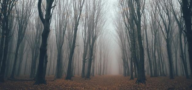 Floresta assustadora com nevoeiro