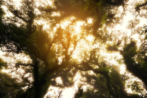Floresta assustadora, olhando para cima
