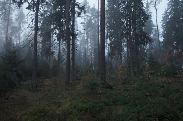 Floresta atmosférica com neblina e neblina matinal