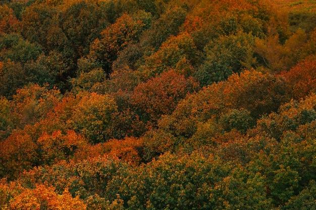 Floresta basca com cores de outono.