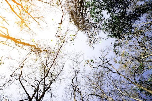 Floresta bonita da estação do outono com céu azul.