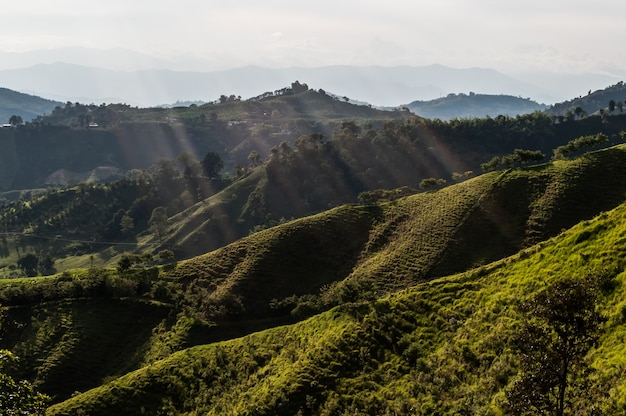 Floresta café fazenda colômbia manizales verde