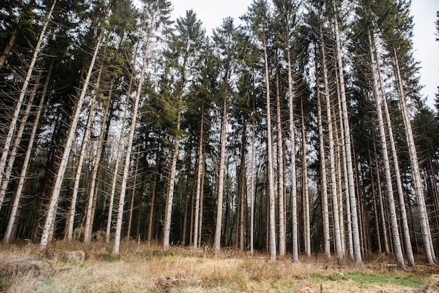 Floresta coberta de grama cercada por árvores altas sob um céu nublado