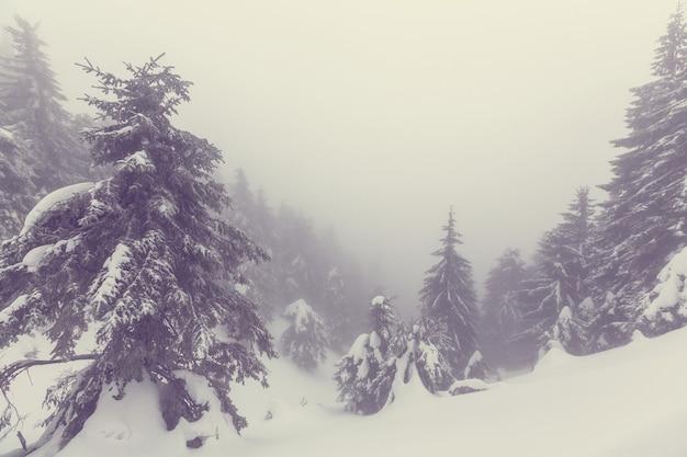 Floresta coberta de neve cênica na temporada de inverno. bom para o fundo de natal.