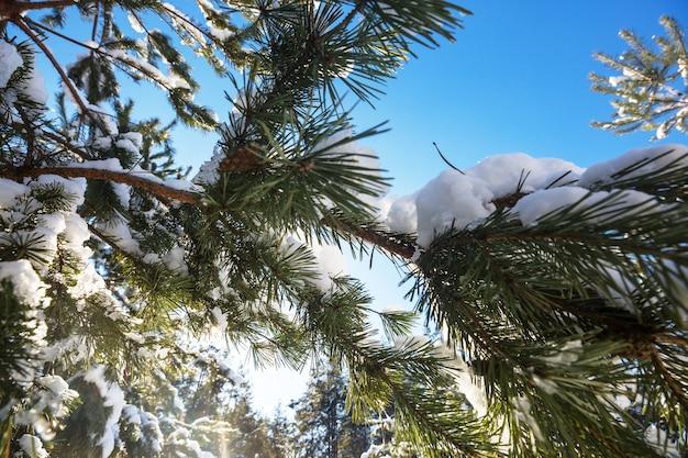 Floresta coberta de neve cênica na temporada de inverno.