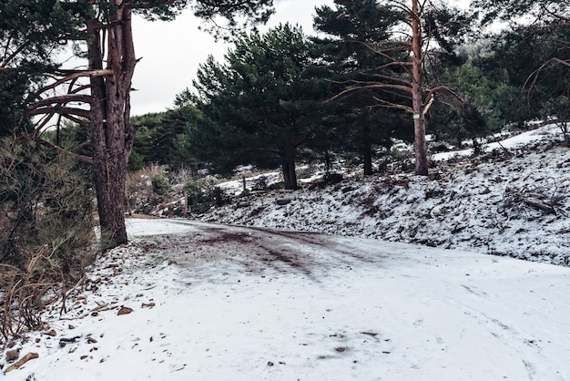 Floresta coberta de neve durante o dia no inverno