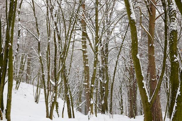 Floresta coberta de neve