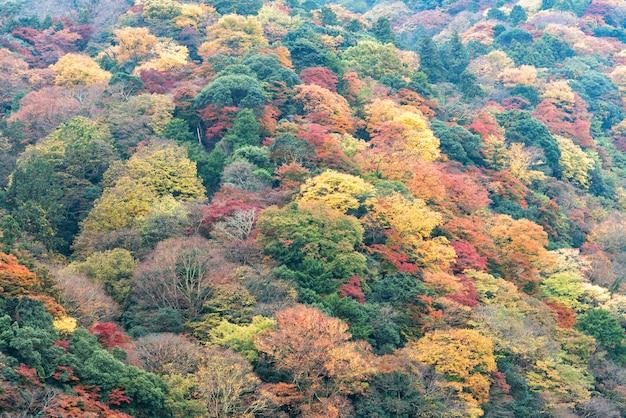 Floresta colorida da montanha da folha do outono, área de arashiyama, kyoto, japão.
