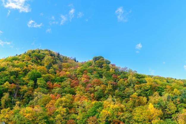 Floresta colorida na temporada de outono de montanha em jozankei,
