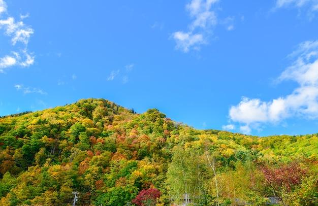 Floresta colorida na temporada de outono em jozankei,