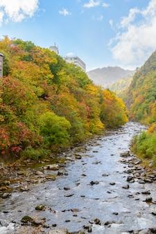 Floresta colorida na temporada de outono em jozankei