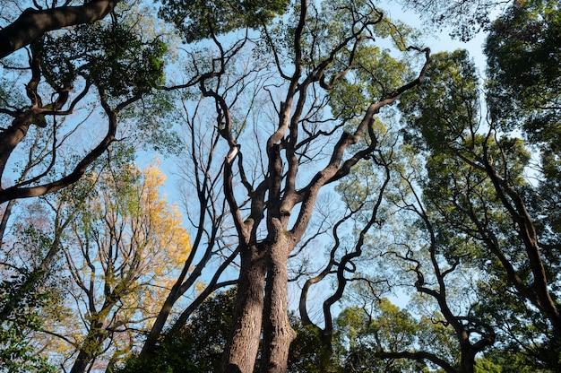 Floresta com árvores perto