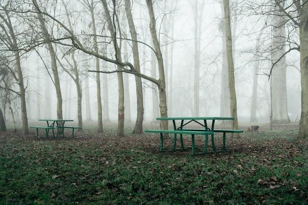 Floresta com bancos e árvores sem folhas envolta em névoa