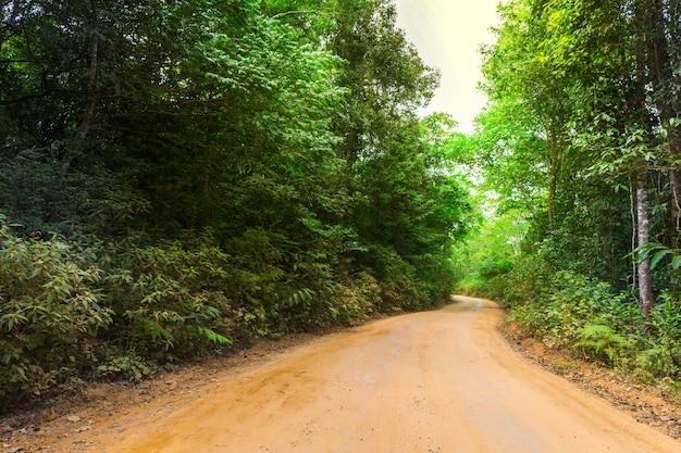 Floresta com caminho