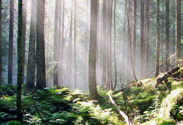 Floresta com luz solar