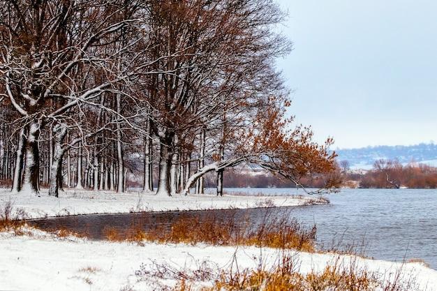 Floresta com neve à beira do rio em tempo nublado, vista de inverno