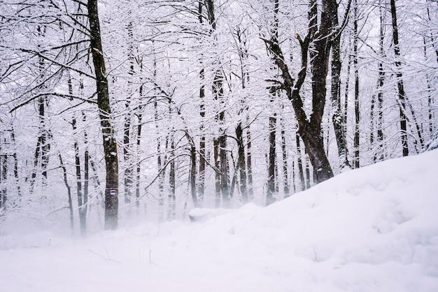 Floresta com neve de inverno em um dia frio