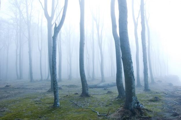 Floresta com névoa