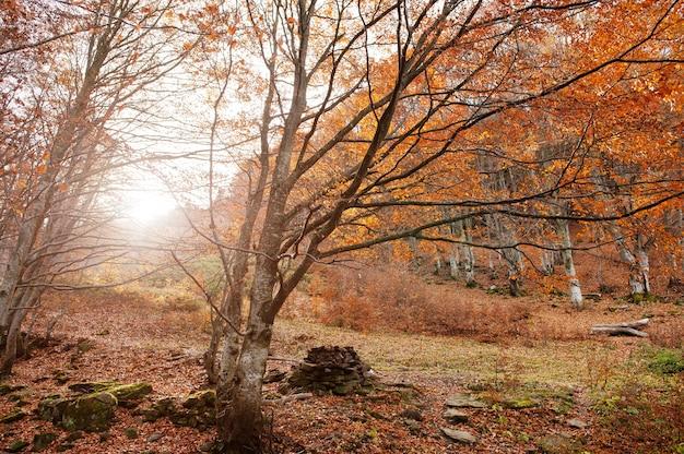 Floresta com pedras e folhas caídas vermelhas na madeira da luz solar.