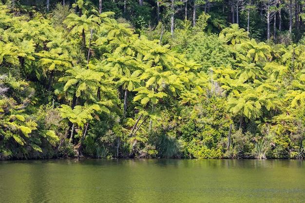 Floresta com samambaias, belas paisagens verdes na nova zelândia