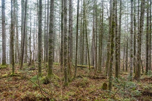 Floresta com textura de fundo de árvores e terra no início da primavera com luz do sol