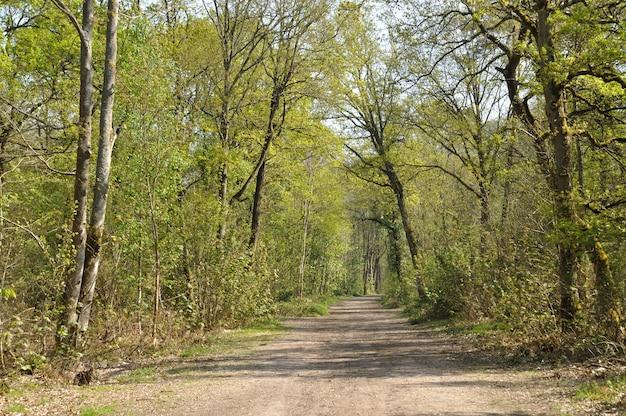 Floresta comunal de saint-pierre-lã¨s-elbeuf