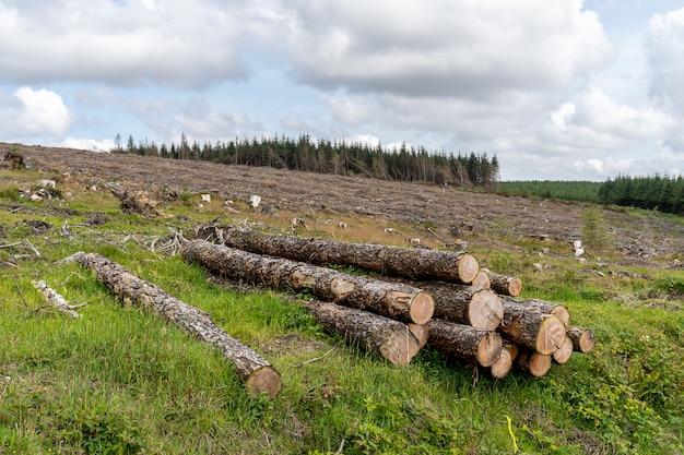 Floresta cortada de maneira lenta.