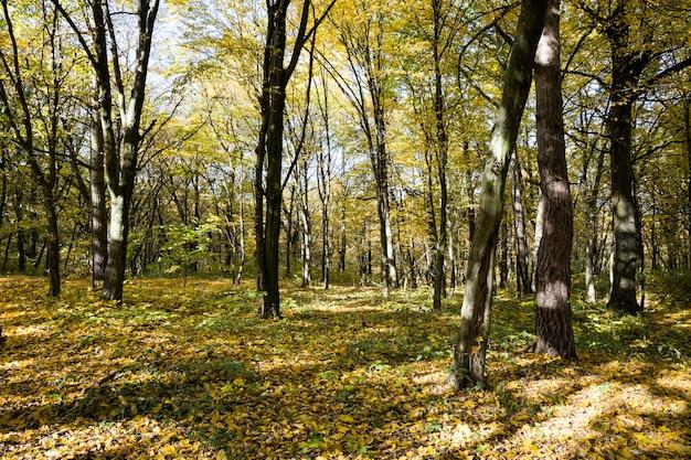 Floresta crescendo em terreno montanhoso durante o outono do ano, iluminada pelos raios do sol no início do outono e meados do outono