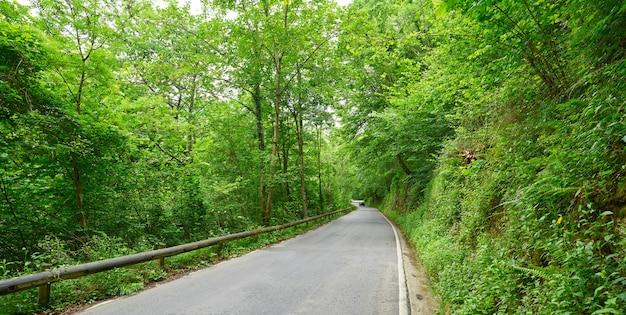 Floresta da estrada de covadonga em astúrias picos europa