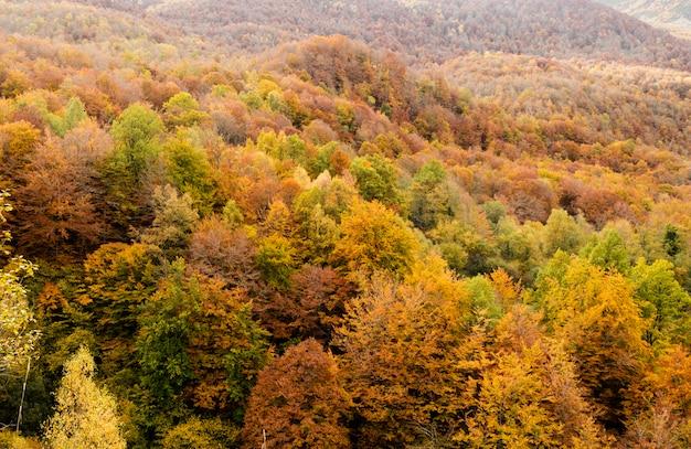 Floresta da faia da espanha no outono. monasterio de hermo, astúrias.