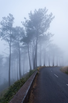 Floresta da fantasia, ilha da madeira, portugal