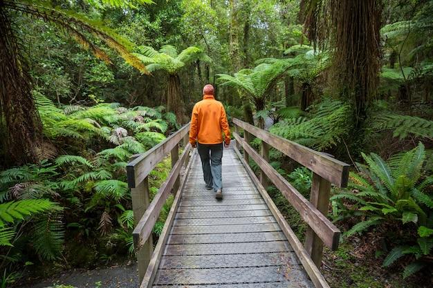 Floresta da selva tropical da nova zelândia.
