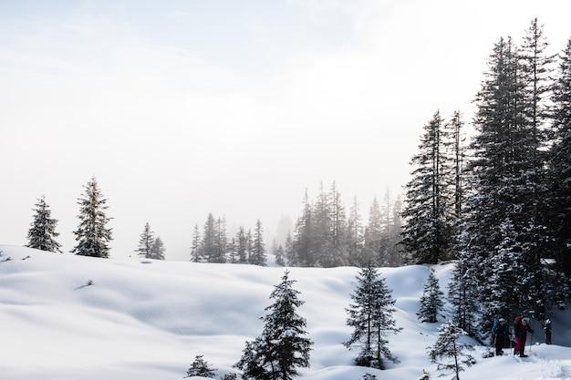 Floresta de abetos durante o inverno coberta de neve