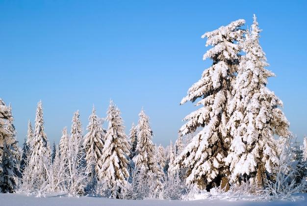 Floresta de abetos em uma passagem na montanha após uma queda de neve contra um céu azul claro