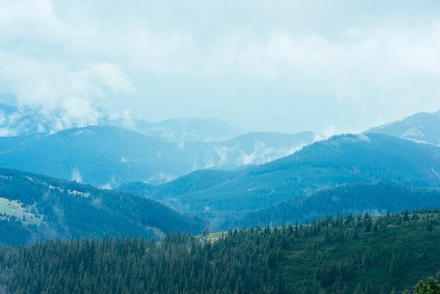Floresta de abetos nas montanhas verdes